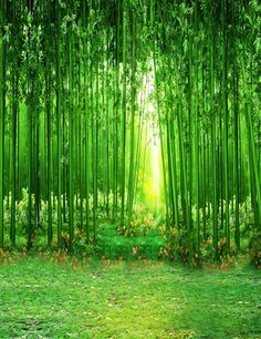 >> Click to Buy << Vinyl cloth Computer printed bamboo photo backdrop green grass  Photography Backgrounds #Affiliate