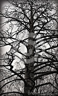 Dead Tree - Download From Over 58 Million High Quality Stock Photos, Images, Vectors. Sign up for FREE today. Image: 90557869