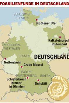 Fossilien_DW_Reise_BERLIN.jpg