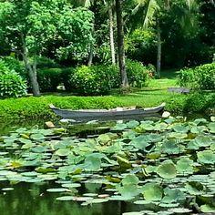 Lotus pond in Camdia