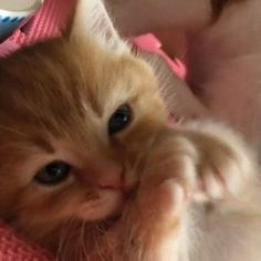 Look at my paws I cleaned them all by myself by emoposer cats kitten catsonweb cute adorable funny sleepy animals nature kitty cutie ca
