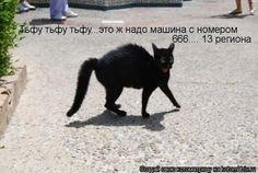 суеверная кошка