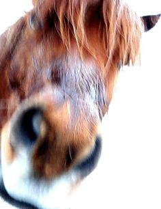 If you will kiss my long wet nose I will love you forever if I remember to by Hilde Widerberg Horse Face, My Horse, Horses, She Left Me, Love You Forever, Kiss Me, I Love You, Photographs, Portrait