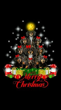 Christmas Dachshund Rescue, Mini Dachshund, Dachshund Puppies, Christmas Animals, Christmas Dog, Christmas Greetings, Winnie Dogs, Les Moomins, Dog Pictures