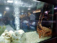 Rimini: manuale di sopravvivenza (al turismo di massa!) Aquarium, Tourism, Goldfish Bowl, Fish Tank, Aquarius