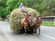 File:Mara Valley - near Maramures - Romania. Human Cow, Going Up The Country, Dresden, Visit Romania, New Tractor, The Beautiful Country, Beautiful Places, Work Horses, Cultural Diversity