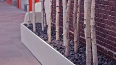 The #HubSpot building is decorated with birch trees--bringing the outdoors in!