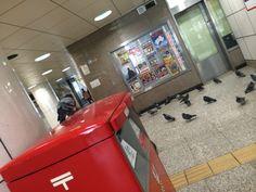 これも新宿西口。ハトの群衆とポスト。