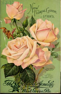 New floral guide : 1910