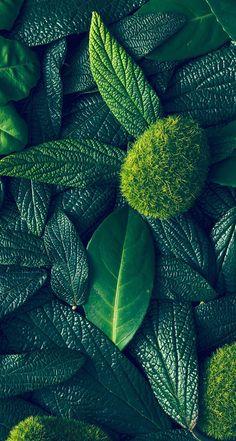 New wallpaper green plants Ideas Natur Wallpaper, Plant Wallpaper, Green Wallpaper, Trendy Wallpaper, New Wallpaper, Flower Wallpaper, Pattern Wallpaper, Wallpaper Backgrounds, Mobile Wallpaper
