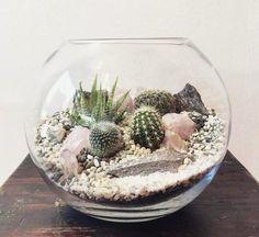 Terrarium dans un bocal sphérique en verre Plus