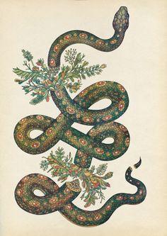 Botanical Illustrations by Katie Scott Katie Scott is a freelance illustrator…