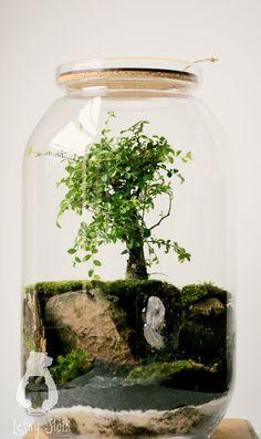 Leśny Słoik/ Las w słoiku/ Forest Jar/ Bonsai Terrarium Bowls, Terrarium Plants, Succulent Terrarium, Bonsai Tree Types, Bonsai Trees, Indoor Gardening Supplies, Bottle Garden, Tire Garden, Inside Plants