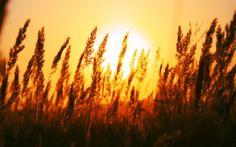 Beautiful sunset wallpaper - See more on Classy Bro Sunrise Wallpaper, Summer Wallpaper, Wallpaper Downloads, Hd Wallpaper, Sunrise Pictures, Nature Landscape, Sunrise Photography, Art Photography, Beautiful Sunrise