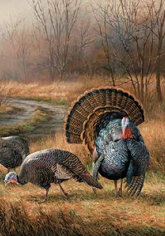 Wild Wings is one of today's leading publishers, distributors and retailers of wildlife art prints and nature-related home furnishings and decorating accessories, perfect for home and cabin decor. Turkey Drawing, Turkey Painting, Turkey Art, Wild Turkey, Turkey Pics, Wildlife Paintings, Wildlife Art, Hunting Art, Thanksgiving Art