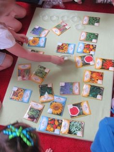 "Seed centered activity: Explore different seeds, read ""The Tiny Seed"" Eric Carle"