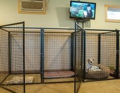 basement dog kennel | The Rover's Ranch Boarding Facility and Philosophy