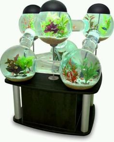 My future fish tank!