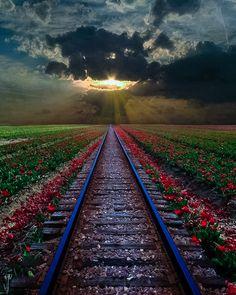Sun on the tracks...