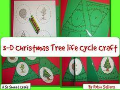 Life Cycle of a Christmas tree