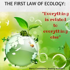 Saving the Planet should be a team effort! Start slow. Buy Eco-friendly beauty products, find ways to stop waste, teach your children to protect animals. It WILL make a difference!