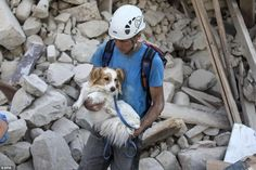 A volunteer carries a dog away from the ruins of a building in the earthquake-hit town of ...24.8.2016