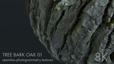 Oak tree bark 01 - seamless photogrammetry texture by Monika Urbańczyk
