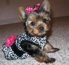 I'm usually not into people dressing up their dogs but this is just too cute!