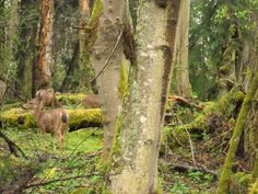 Wildlife in a wonderland--Olympia National Park, Washington