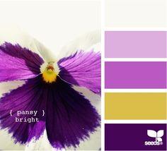 pansy bright white yellow and purple wedding