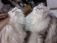 Chloé & Henri in mommy's design studio