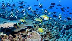 Bizarre and Beautiful Coral Reef Animals | Smithsonian Ocean Portal