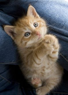 Cute Cat - 37 Pictures and like OMG! get some yourself some pawtastic adorable cat shirts, cat socks, and other cat apparel by tapping the pin!