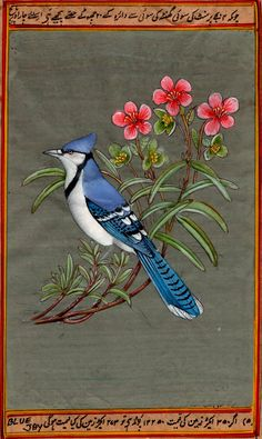 Blue Jay Bird Painti