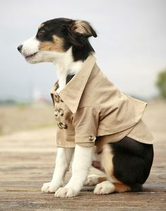 adorable trench coat for a stylish pup