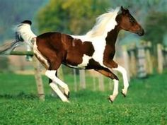 Image Search Results for horses