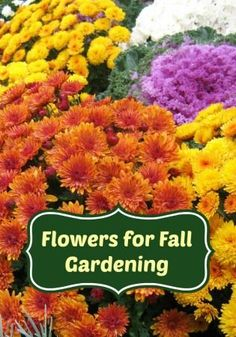 The Best Flowers For Fall Gardening