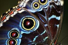 EYES ON A BUTTERFLY