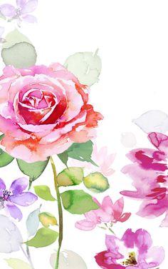 Harrison Ripley - 8x5-ag-valantines-rose-