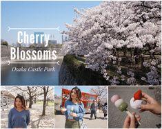 Cherry blossoms at Osaka Castle Park