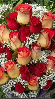 Beautiful Rose Flowers, Love Rose, Exotic Flowers, Amazing Flowers, Beautiful Gardens, Photomontage, Love Wallpaper Download, Happy Birthday Wishes Photos, Happy Christmas Day