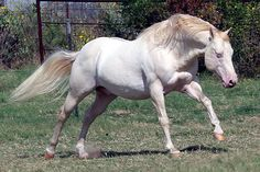 Your Favorite Stallion (well-known or not... any breed/breeds... grade or registered) - Page 3