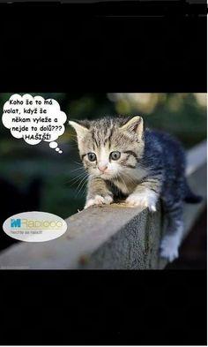Funny Memes, Jokes, Carpe Diem, Humor, Haha, Cartoon, Cute, Animals, Animal Pictures