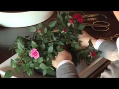 ▶ How to Make Your Own Bonsai #2 / 盆栽講座 山田香織 - YouTube