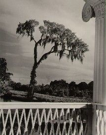 Clarence John Laughlin  Enchanted Tree, Number One  1947
