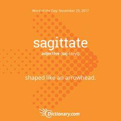 Dictionary.com's Word of the Day - sagittate - shaped like an arrowhead.
