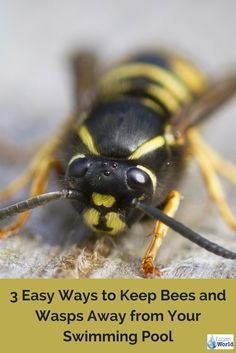 Take back your swimming pool from those pesky bees and wasps! LinerWorld is sharing some easy ways to keep these insects away from your pool.