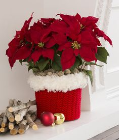 Free Knitting Pattern for North Pole Pot Cozy - Knit a cozy for your poinsettia or other plants with Santa-inspired fur trim. Perfect for gifts, too. Fits a 1.75 gallon/66 liter black grower pot but I think you could customize for different sizes. Designed by Laura Bain for Red Heart.