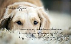 Reading, Dogs, Animals, Animales, Animaux, Pet Dogs, Reading Books, Doggies, Animal