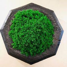 Вертикальное озеленение (@greenmoss48) • Фото и видео в Instagram Herbs, Herb, Medicinal Plants